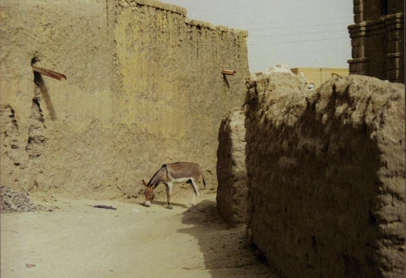 Het is hier uitgestorven, soms zie je eerder een ezel dan een mens.